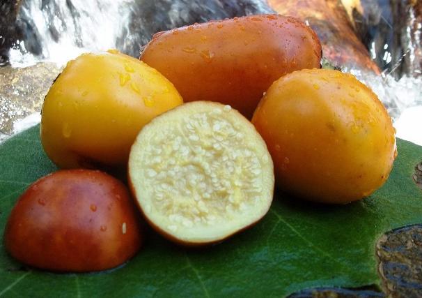 Maná-cubiu, fruta da Amazônia (Foto: Divulgação)