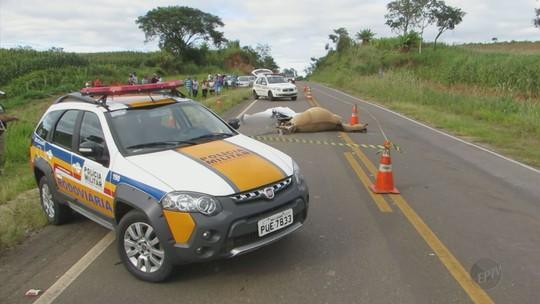 Motociclista morre ao bater em cavalo entre Pratápolis e Itaú de Minas, MG