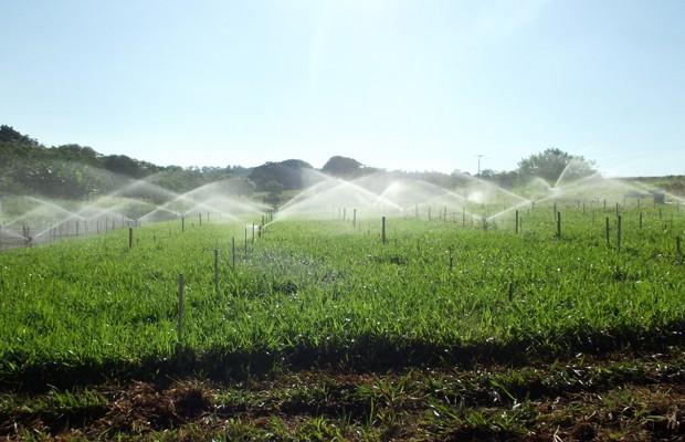 Região de irrigação com esgoto em caráter experimental em Braquiária. (Foto: Divulgação)