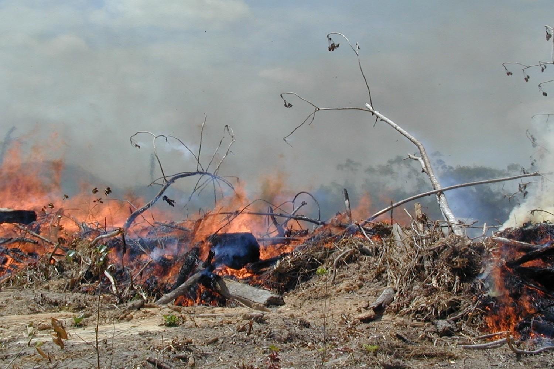 Queimada na Amazônia (Foto: Doug Morton/Divulgação/Nasa)