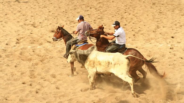 vaquejada-esporte-tradição-boi-cavalo (Foto: Turismo Bahia/CCommons)