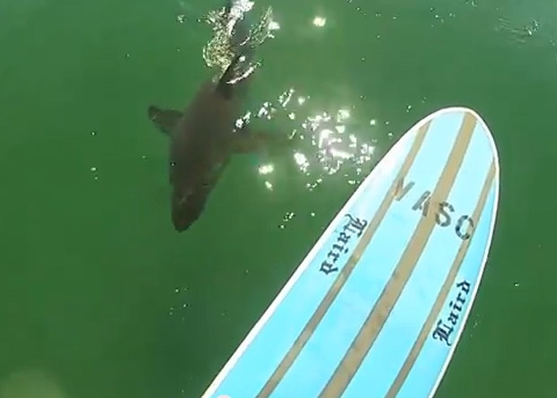 Mike Durand ficou 'cara a cara' com tubarão, que nadou logo abaixo de sua prancha  (Foto: Reprodução/YouTube/Mike Durand)