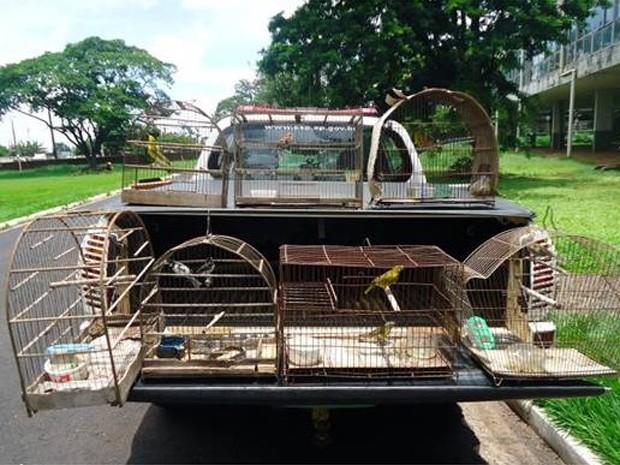Após denúncias, 37 aves foram libertadas na natureza durante fiscalização. (Fot Polícia Militar Ambiental/ Divulgação)