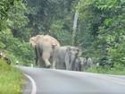 Motociclista 'implora' para não ser atacado por elefantes na Tailândia