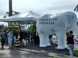 Elefante inflável simboliza inquérito policial  (Foto: Divulgação / PF)