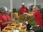 Produtores de frutas de SP trabalham dobrado para dar conta dos pedidos