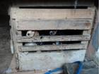 Polícia fecha canil ilegal em Curitiba e apreende 56 cachorros e 4 gatos
