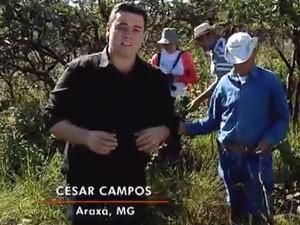Repórter César mostra que espécies em extinção são transplantadas em Reserva (Foto: Divulgação)