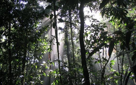 Floresta não perturbada na Amazônia paraense (Foto: Malva Hernandez / Divulgação)