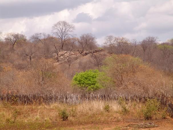 Uma paisagem do semiárido (Foto: Divulgação / Embrapa Semiárido)