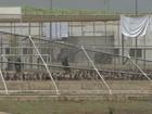 100 presos são recapturados após motim no CPP de Jardinópolis, SP