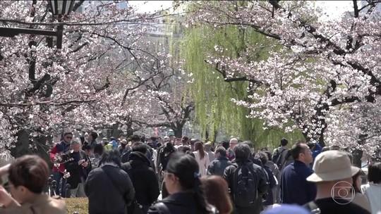 Florada das cerejeiras marca a chegada da primavera ao Japão