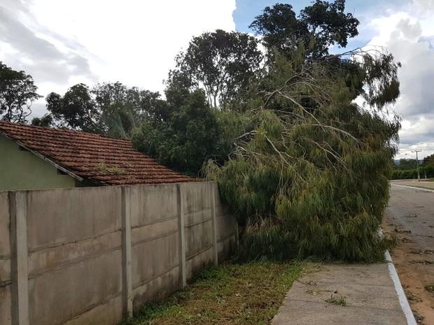 Árvores caíram em cima de casas (Foto: Prefeitura de São Salvador/Divulgação)