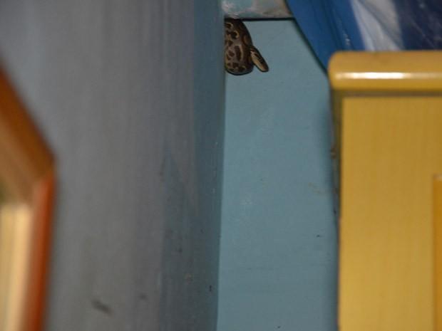 """Uma jiboia arco-íris foi encontrada dentro de uma casa no bairro de Mandacaru, em João Pessoa, na noite desta sexta-feira (26). O cabo Fabrício do Batalhão Ambiental da Polícia Militar disse que ela conseguiu fugir pelo telhado da casa. """"Era um filhote e tinha muitos acessos para ela fugir. Até subi na casa para tentar pegar o animal mas não consegui. Aqui é muito próximo do habitat natural dela, ela deve ter voltado para lá"""", finalizou. (Foto: Walter Paparazzo/G1)"""