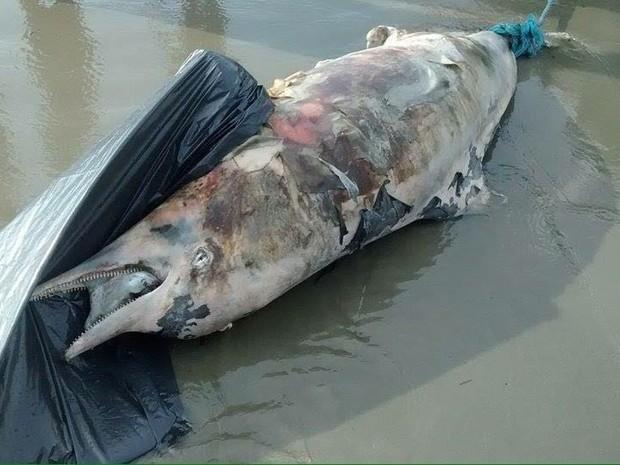 Animal foi encontrado morto próximo ao Emissário Submarino (Foto: João Medina/Arquivo Pessoal)