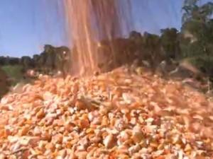 Solução para falta de milho pode chegar com a próxima safra do grão (Foto: Reprodução/RBS TV)