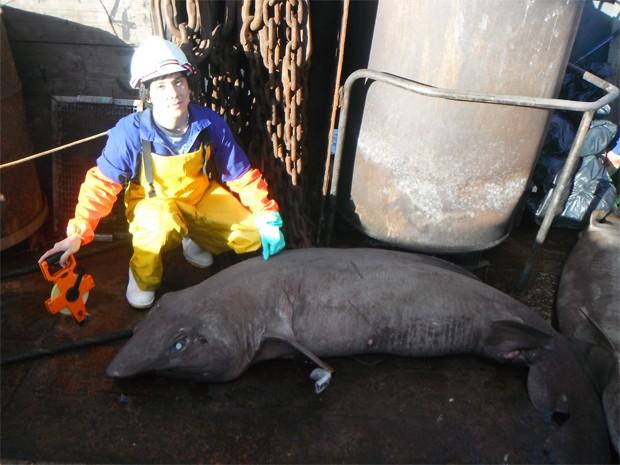 Estudante Paul Clerkin com tubarão (Foto: Moss Landing Marine Laboratories/Divulgação)