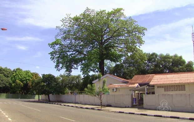 Dia da Árvore é comemorado nesta segunda-feira (21) (Foto: Roraima TV)