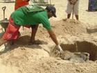 Cinco tartarugas são encontradas mortas em praias de Alagoas