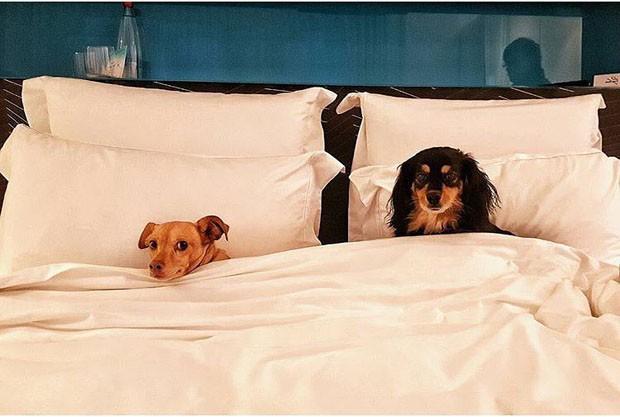 O hotel boutique de Tel Aviv que recebe bem os cães (Foto: Assaf Pinchuk e Yael Engelhart/ Divulgação)