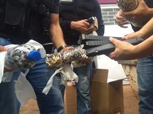 Policiais encontram munição em garrafas dentro de uma casa (Foto: Jonas Campos/RBS TV)