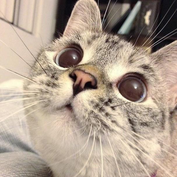 @nala_cat (Foto: Instagram/Reprodução)