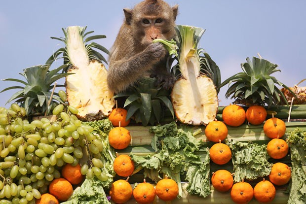 Macacos ganharam banquete em templo na província de Lopburi (Foto: Damir Sagolj/Reuters)