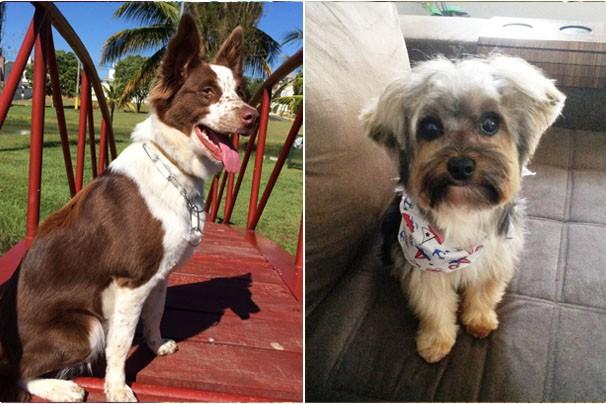 Telespectadores enviaram centenas de fotos para o Mania de Cão (Foto: Fotos Cedidas)