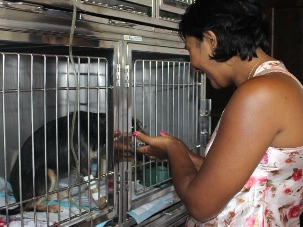 Belinha não corre risco de morte, mas continua internada para observação (Foto: Juliene Katayama/G1 MS)