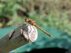 Pesticidas reduziram diversidade de espécies de invertebrados, diz estudo