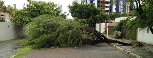 Árvore caiu no bairro Manaíra em João Pessoa (Foto: Walter Paparazzo/G1)