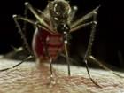 MS tem 171 casos confirmados de zika (reprodução GloboNews)