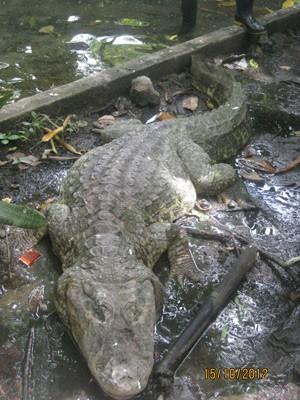 Segundo necrópsia, animal teve fratura na coluna vertebral após ser atingido por pedrada (Foto: Divulgação/Zoobotânico Arruda Câmara)