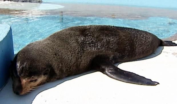 Animal foi encontrado em julho, em uma praia de Guarapari. (Foto: Reprodução/TV Gazeta)