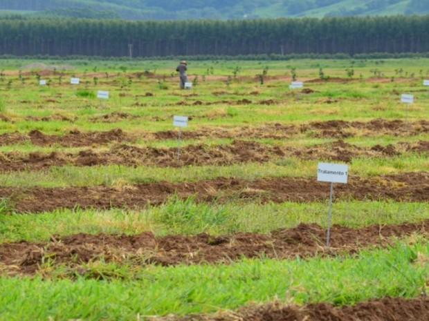Fundecitrus mantém plantação de laranjas transgências em Ibaté (Foto: Reprodução/EPTV)