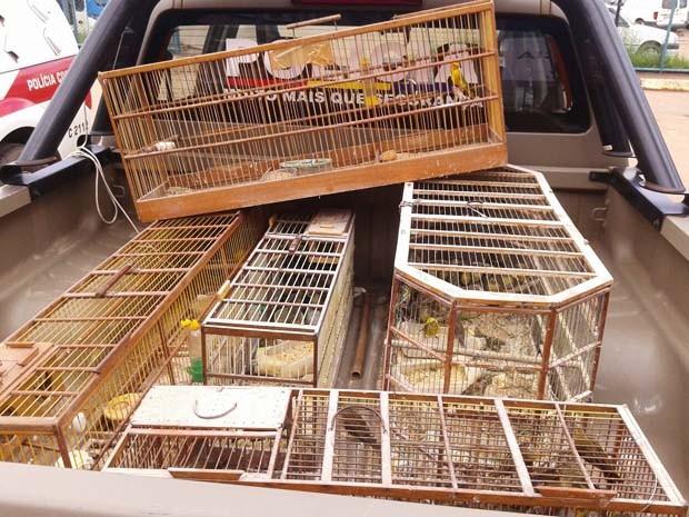 Pássaros silvestres apreendidos em duas casas em Samambaia Norte (Foto: Polícia Militar/ Divulgação)