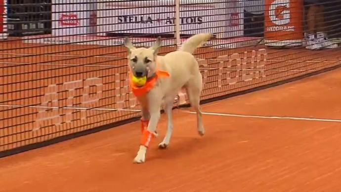 Cachorro Aberto do Brasil (Foto: Reprodução / SporTV)