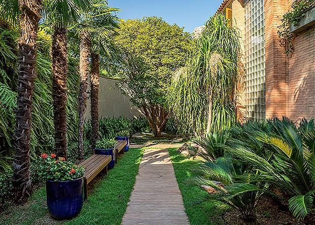 jardim vertical no muro : jardim vertical no muro:principal é ladeado por palmeiras moinho-de-vento com jardim vertical