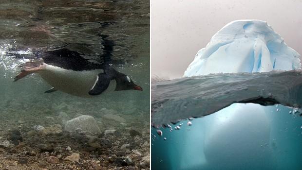 À esquerda, pinguim mergulha em oceano gelado da Antártica; à direita, iceberg fotografado por brasileiro (Foto: Divulgação/Daniel Botelho)