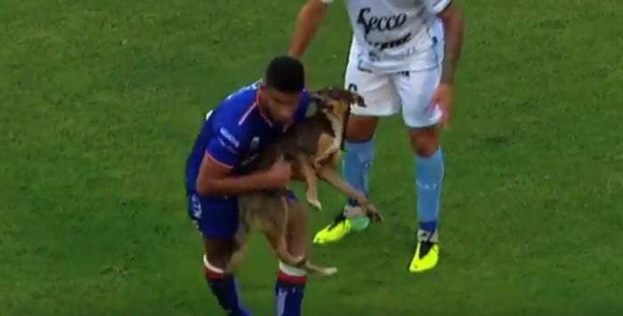 cachorro Campeonato Argentino