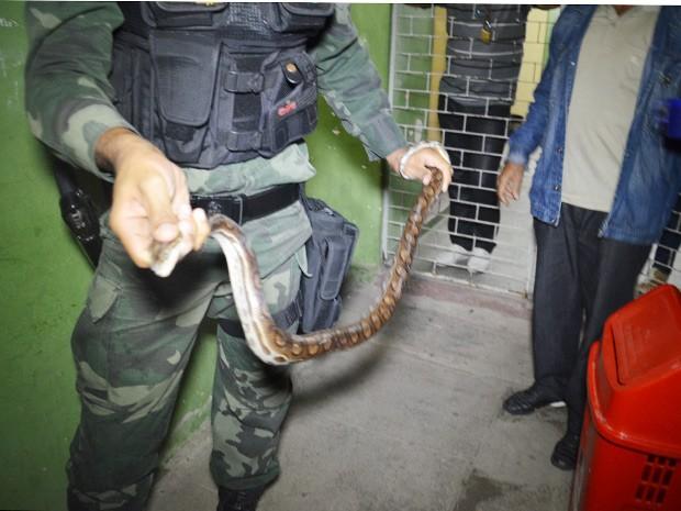 Cobra foi capturada próximo a uma escola de Bayeux, Grande João Pessoa  (Foto: Walter Paparazzo/G1)