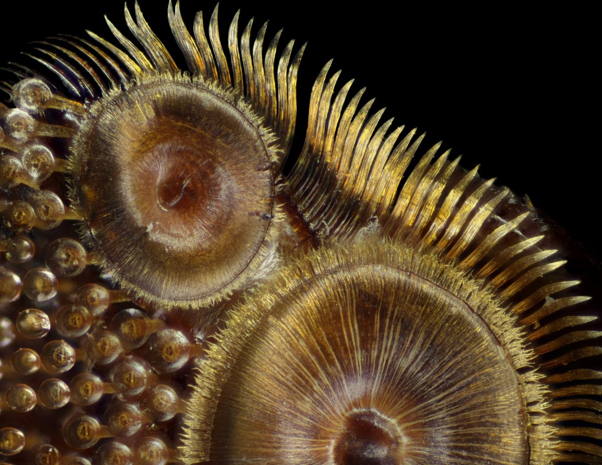 (Foto: Giorgio Seano and Rakesh K. Jain/Nikon Small World)