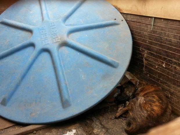Cachorro acorrentado dentro do contêiner, no Lago Sul (Foto: Polícia Militar/Divulgação)