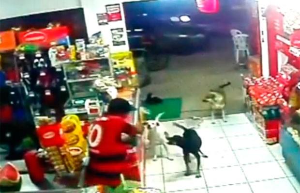 Assaltante ficou irritado e ameaçou atirar nos cachorros que latiam para ele (Foto: Divulgação/Polícia Militar do RN)