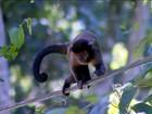 'Macaco é sentinela', diz agente sobre preocupação com matança de animais