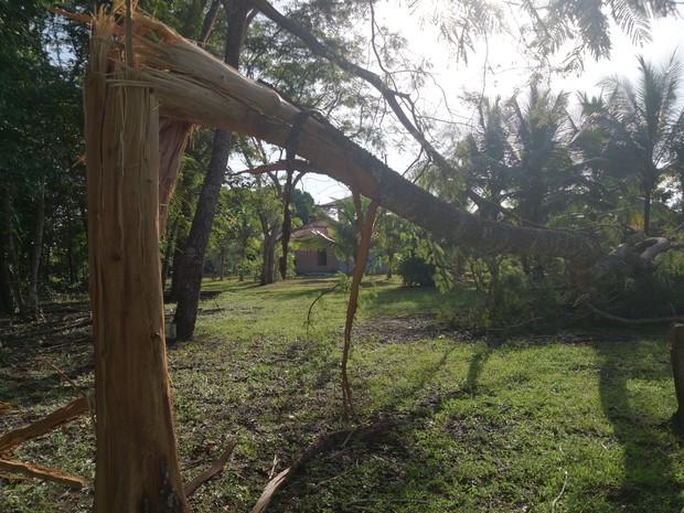 Árvore fica a 50 metros de chácara (Foto: Bruno Dantas)