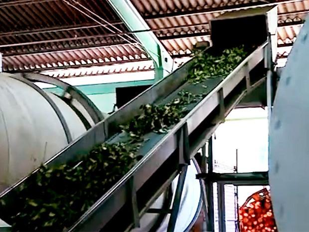 Ervateira de Arvorezinha vende produto para gaúchos em outros estados (Foto: Reprodução/RBS TV)