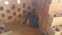 Tamanduá-mirim é resgatado (Divulgação/ GAM)