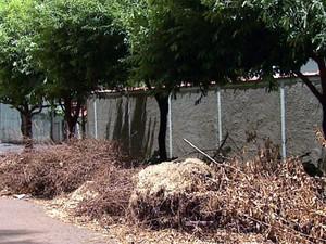 Restos de árvore atrapallham moradores e motoristas no Jardim Recreio (Foto: Valdinei Malaguti/ EPTV)