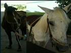 Cavalos usados em equoterapia para crianças são furtados em Anápolis